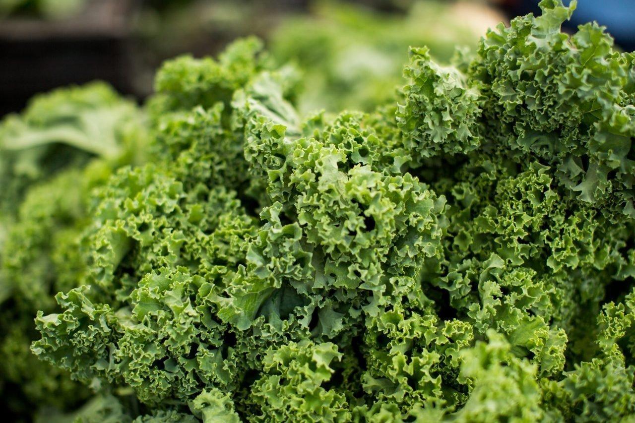 Verdura hojas verdes