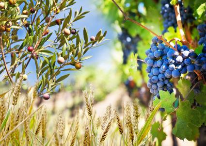 El Mediterráneo y La Nueva Gastronomía