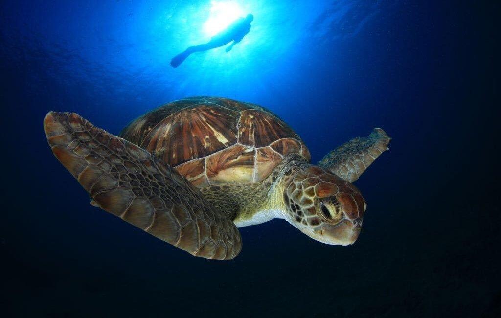 Tenerife, un paraíso bajo el agua
