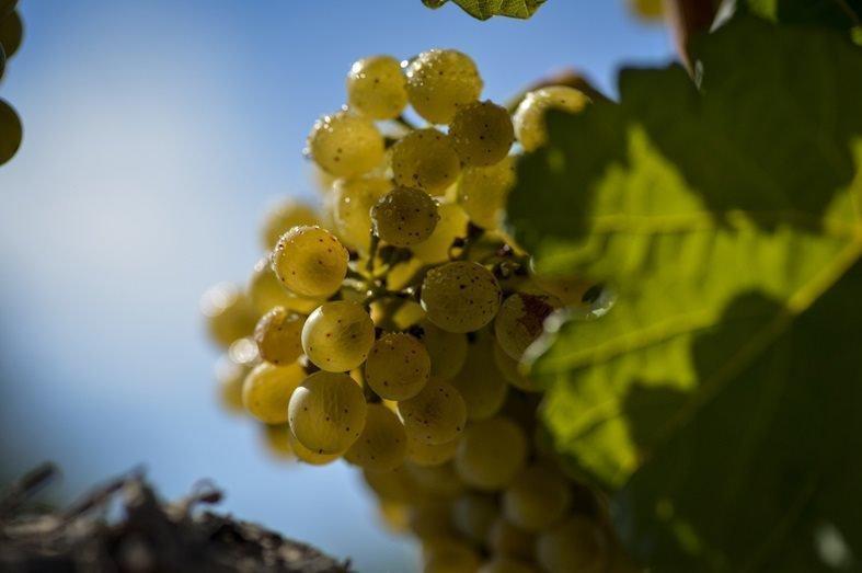 Familia Torres, los vinos del futuro